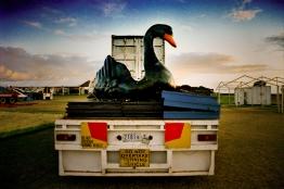 Swan [photograph, 1999]