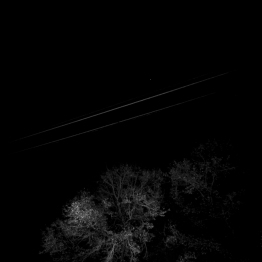Star, wires, tree [photograph, 2010]