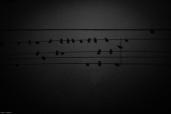Bird music [photograph, 1999]