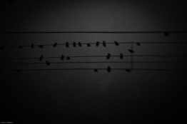 Bird music [photograph, 1999]