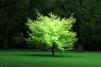 Tree [photograph, 2006]